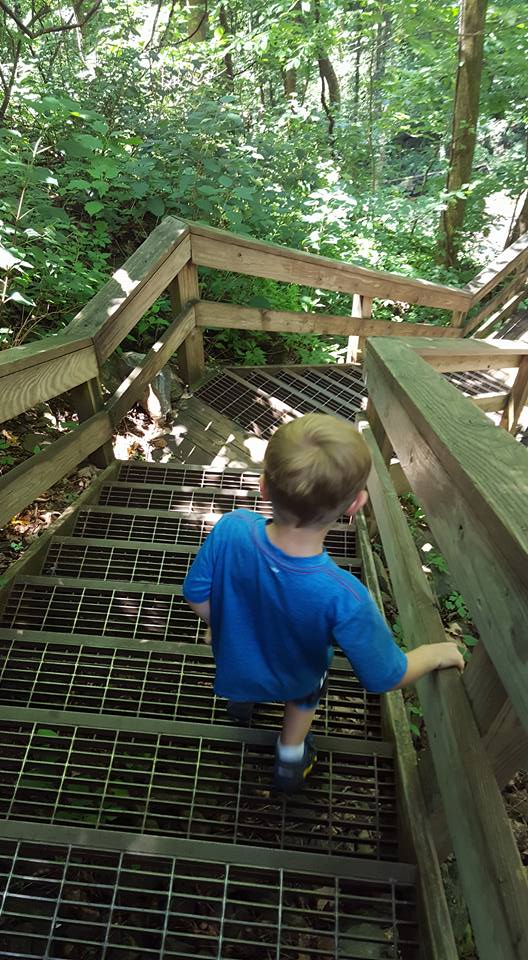Amicalola-Falls-Steps Our Favorite Family Hiking Trails in Ellijay - Gilmer County Chamber of Commerce