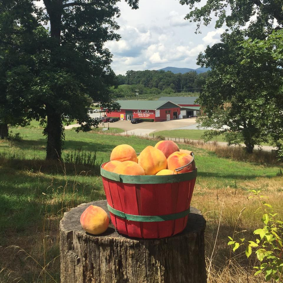 Peaches at BJ Reece Orchards