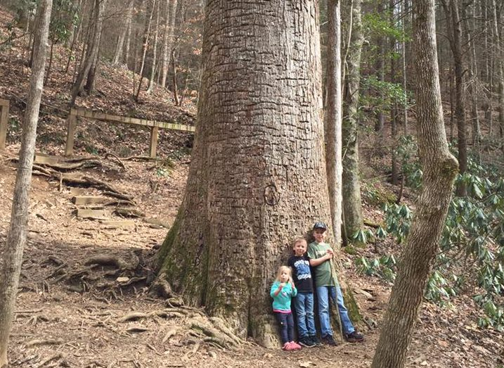 Family-Hiking-e1521144781541 The Best Things To Do for Spring Break in Ellijay - Gilmer County Chamber of Commerce