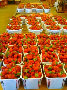 strawberries1-225x300 10 Reasons You Should Visit R&A Orchards in the Spring and Summer - Gilmer County Chamber of Commerce